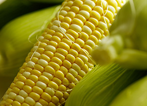 How to choose waxy maize