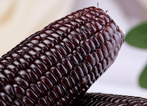 The black corn is genetically modified